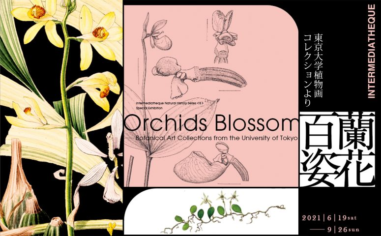 """Special Exhibition """"Orchids Blossom – Botanical Art Collections from the University of Tokyo"""""""